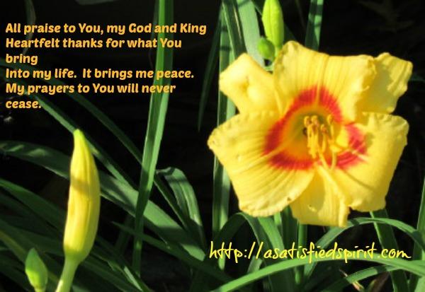 Prayer Lily