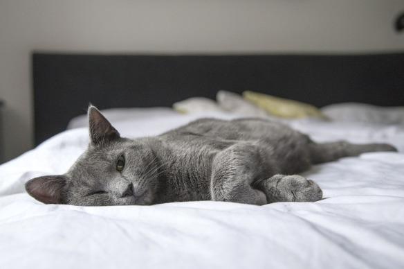 cat-1818927_960_720