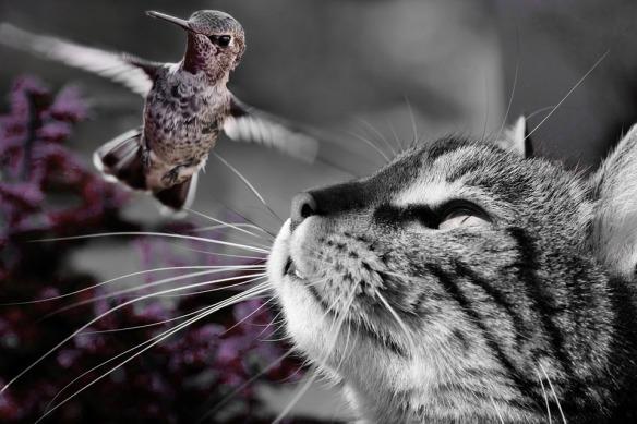 cat-861105_960_720